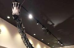 丹波竜化石上半身
