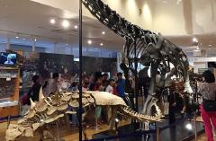 丹波竜化石下半身